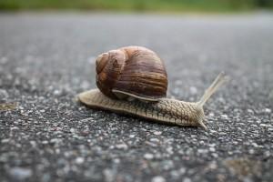 snail-1844618_640